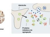 Agregação amilóide na doença de Alzheimer e mecanismos neuronais de proteção