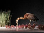 Exposição Variações Naturais – uma viagem pelas paisagens de Portugal