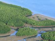 Vista aérea de florestas de mangal no arquipélago dos Bijagós