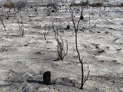 Concurso FCT de projetos para a Investigação em Fogos Florestais