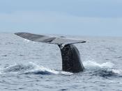 Fotografia de mamífero marinho