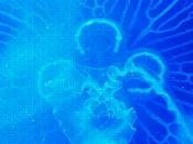 Imagem ilustrativa do programa
