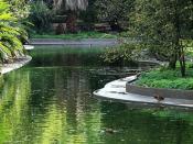Fotografia do Jardim Botânico Tropical