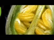 Logótipo do Programa Doutoral Plants for Life, inserido numa imagem ilustrativa do mesmo