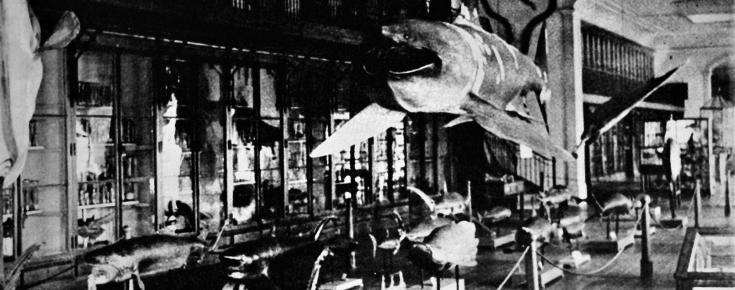 Galeria da fauna marinha (maioria tropical), anos 1950/1960