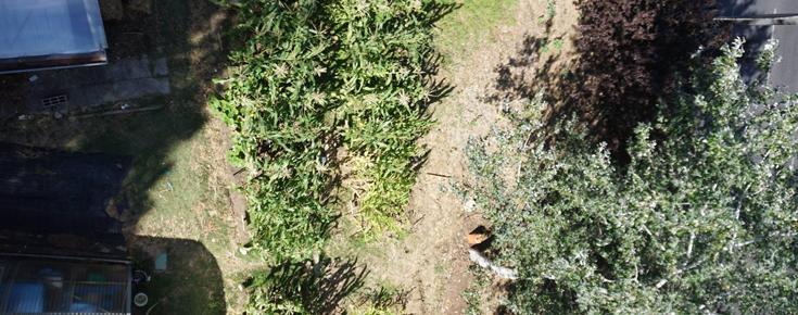 Vista aérea da zona de cultivo no PermaLab, no campus de Ciências ULisboa