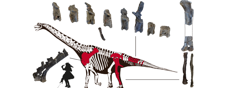 Esqueleto de <i>Oceanotitan dantasi</i> à escala