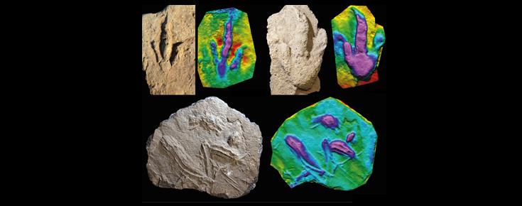 Duas pegadas de dinossáurios carnívoros e marcas interpretadas como rastos de natação de crocodilos, com os respetivos mapas de profundidade