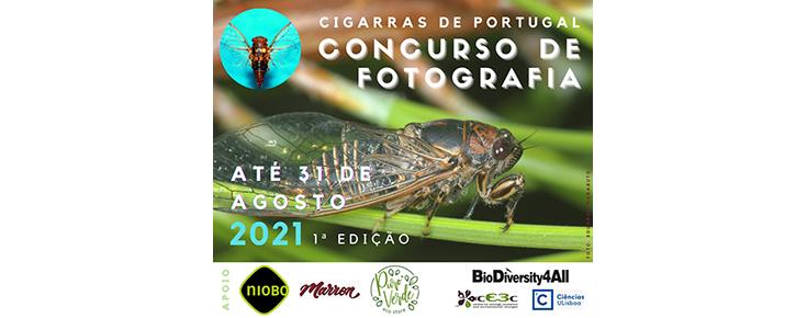 Fotografia de cigarra e informações relacionadas com o concurso