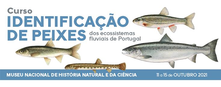 Imagem ilustrativa do curso (peixes)