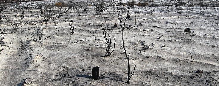Fotografia de uma floresta após um incêndio