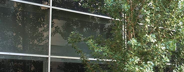 O Departamento de Química e Bioquímica localiza-se no Edifício C8 de Ciências