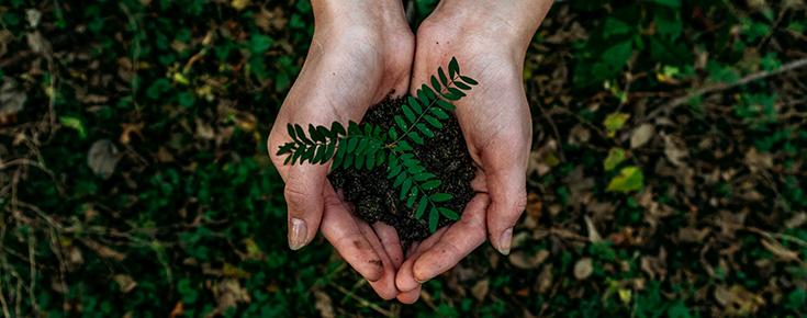 Fotografia de mãos a semear uma planta