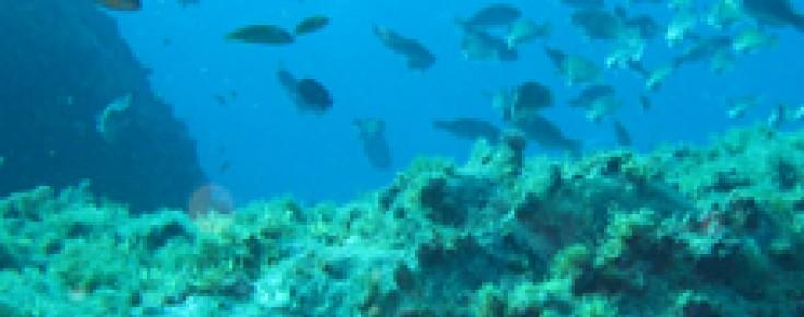 Ambiente subaquático