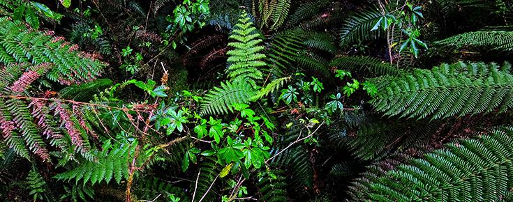 Fotografia de vegetação